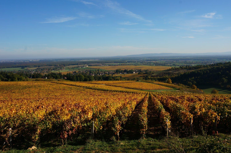 Europe-Ecologie Les Verts Bourgogne